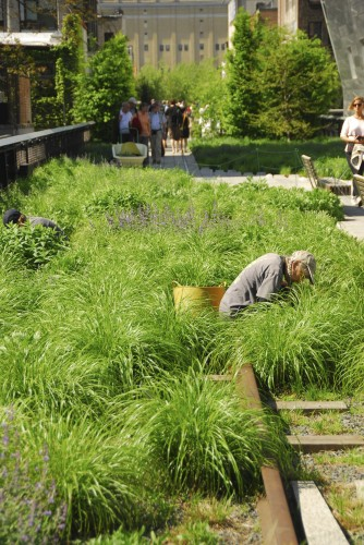 OK, so this is not from the book.  It's the High Line, but shows a really simple matrix of grasses with just enough perennials to lift it to another level
