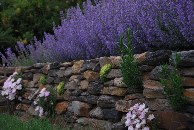 A dry-stone stone wall that I planted as I built it, following the century-old advice from Gertrude Jekyll in her classic Wall, Water and Woodland Gardens.  Nothing cool at all here, but I just had to prove I could do it, and do it properly.