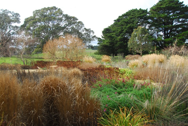 The same garden, at nearly the lowest point of its fall.  It'll thin further, briefly, then deciduous stuff gets cut back